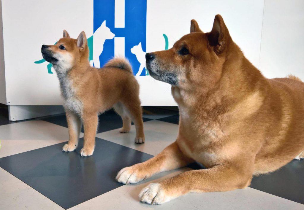 CT scanning af hund i Herlev, Husum, Hvidovre og Rødovre